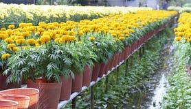 цветочный сад ноготк Стоковые Изображения