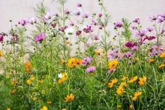 Цветочный сад пастели пустыни Альбукерке Стоковая Фотография RF