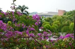 Цветочный сад с архитектурой Стоковое Изображение