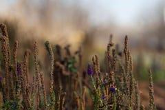 Цветочный сад луга Стоковое Изображение RF