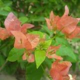 цветочный сад шальной природы любящий стоковые фотографии rf