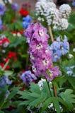 Цветочный сад Стоковое Изображение