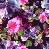 Цветочный узор акварели Безшовный с фиолетовым и розовым букетом на фиолетовой предпосылке вектор Иллюстрация штока