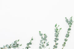 Цветочный узор изолированных листьев евкалипта на белой предпосылке Плоское положение, взгляд сверху стоковые фотографии rf