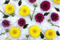 Цветочный узор от бургундской и желтой хризантемы Стоковые Изображения RF