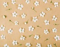 Цветочный узор сделанный из белых цветков и бутонов весны на предпосылке коричневой бумаги Плоское положение Стоковые Изображения RF