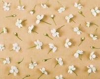Цветочный узор сделанный из белых цветков и бутонов весны на предпосылке коричневой бумаги Плоское положение Стоковое Изображение RF