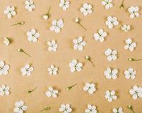 Цветочный узор сделанный из белых цветков и бутонов весны на предпосылке коричневой бумаги Плоское положение Стоковая Фотография