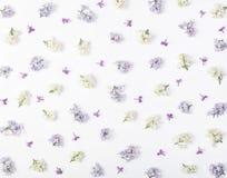 Цветочный узор сделанный из весны белой и фиолетовых изолированных цветков сирени на белой предпосылке Плоское положение Стоковое Фото