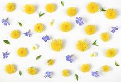 Цветочный узор сделанный из желтых изолированного одуванчика, цветков сирени и листьев на белой предпосылке Плоское положение Стоковые Изображения