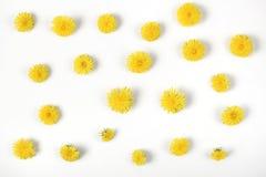 Цветочный узор сделанный из желтых изолированных цветков одуванчика на белой предпосылке Плоское положение Стоковые Фотографии RF