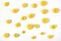 Цветочный узор сделанный из желтых изолированных цветков одуванчика на белой предпосылке Плоское положение Стоковая Фотография RF