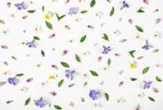 Цветочный узор сделанный из изолированных цветков весны, wildflowers сирени, розовых бутонов и листьев на белой предпосылке Плоск Стоковая Фотография RF
