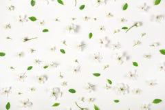 Цветочный узор сделанный из изолированных цветков и листьев весны на белой предпосылке Плоское положение Стоковое Изображение