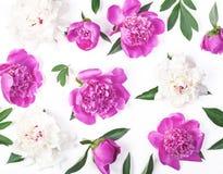 Цветочный узор сделанный из розовых и белых изолированных цветков и листьев пиона на белой предпосылке Плоское положение Стоковое Изображение RF