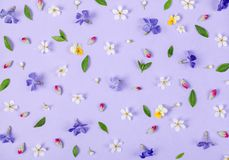 Цветочный узор сделанный из цветков весны белых и фиолетовых, листьев зеленого цвета и розовых бутонов на пастельной предпосылке  Стоковое Изображение