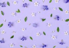 Цветочный узор сделанный из цветков весны белых и фиолетовых, листьев зеленого цвета и бутонов на пастельной предпосылке сирени П Стоковые Изображения RF