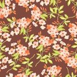 Цветочный узор с розовыми цветками Стоковое Изображение