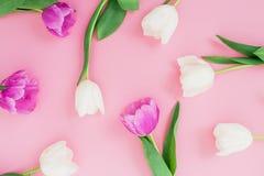 Цветочный узор с тюльпанами цветет на розовой пастельной предпосылке Плоское положение, взгляд сверху Предпосылка дня женщины Стоковое Изображение RF