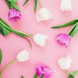 Цветочный узор с тюльпанами цветет на розовой пастельной предпосылке Плоское положение, взгляд сверху Предпосылка дня женщины Стоковое фото RF