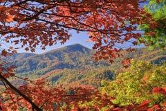 цветы абстрактной осени яркие понижаются красный цвет картины листьев славный semi стоковая фотография rf