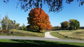 цветы абстрактной осени яркие понижаются красный цвет картины листьев славный semi Стоковые Фото