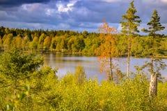 цветы абстрактной осени яркие понижаются красный цвет картины листьев славный semi Стоковые Изображения RF
