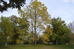 цветы абстрактной осени яркие понижаются красный цвет картины листьев славный semi Стоковая Фотография
