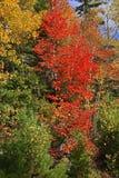 цветы абстрактной осени яркие понижаются красный цвет картины листьев славный semi Стоковое фото RF