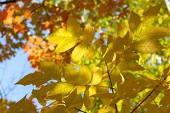 цветы абстрактной осени яркие понижаются красный цвет картины листьев славный semi Стоковое Изображение