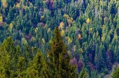 цветы абстрактной осени яркие понижаются красный цвет картины листьев славный semi Зеленые, красные и желтые деревья стоковое фото