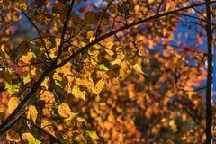 цветы абстрактной осени яркие понижаются красный цвет картины листьев славный semi стоковые изображения