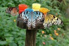 цветы бабочек получают как их Стоковая Фотография