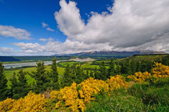Цветы весны на долине горы Стоковая Фотография RF