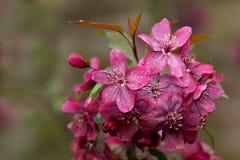 Цветы весны Стоковое Изображение