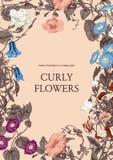 Цветы Гольцы Классическая открытка в винтажном стиле Ботаническая иллюстрация Стоковые Изображения RF