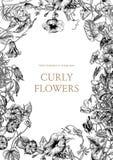 Цветы Гольцы Классическая открытка в винтажном стиле Ботаническая иллюстрация Стоковые Изображения