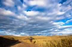 Цветы гор грязной улицы всадника лошади стоковое фото