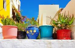Цветы Греции стоковая фотография rf