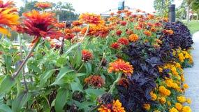Цветы лета Стоковое фото RF