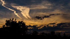 Цветы захода солнца Стоковое Фото