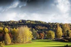 Цветы и ландшафт осени Стоковое Изображение RF