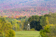 цветы Канады осени стоковое изображение rf