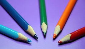 Цветы карандаша Стоковые Фото