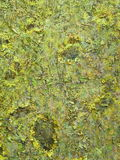 цветы крася поверхность Стоковая Фотография RF