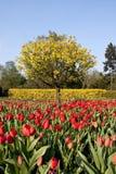 Цветы лета Стоковые Фото