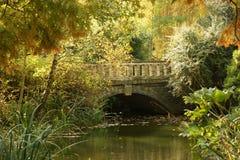 цветы моста осени Стоковое Фото