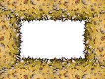 цветы обрамляют первоначально терновый хобот Стоковые Фотографии RF