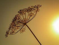 Цветы осени Высушенный - вне засадите лес кервеля в осени стоковая фотография rf