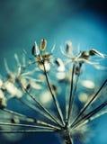 Цветы осени Высушенный - вне засадите лес кервеля в съемках цветов и макроса светов осени стоковые фото